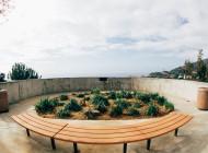 Arborists Deem Coral Tree 'a Risk'