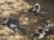 Malibu ranch rescues stray cats