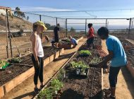 Pepperdine Community Garden Restored