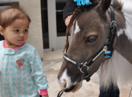 Mini Horses Making a Difference