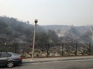 Uncovering the Biology Behind the Woolsey Fire