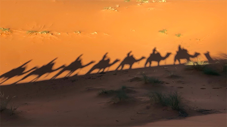 Camel PRINT.jpg