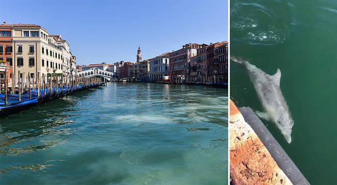 The canals of Venice, Italy, flow clear and empty in the absence of usual boat traffic, allowing residents to spot wildlife for the first time in decades. Photos by Getty, Twitter