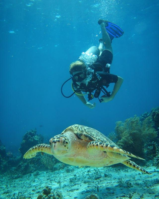 Senior Jon Feyer plunges deep by a sea turtle during a scuba diving trip in Mexico. While the Scuba Club is unable to meet in person, Lucey said she posts scuba safety and reaches out to new members on the group's social media platforms. Photo courtesy of Jon Feyer