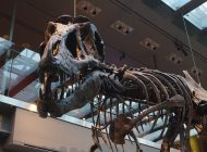 Natural History Museum Offers a Peek Into the Past