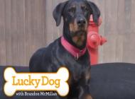 Lucky Dog Advances Animal Rescue Efforts