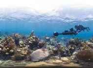 Scientists, Divers Discuss Vanishing Coral Reefs
