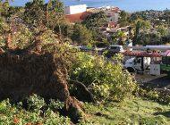 The Santa Ana Winds Return to Malibu